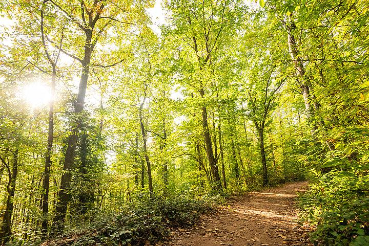 Herbst im Pfälzerwald