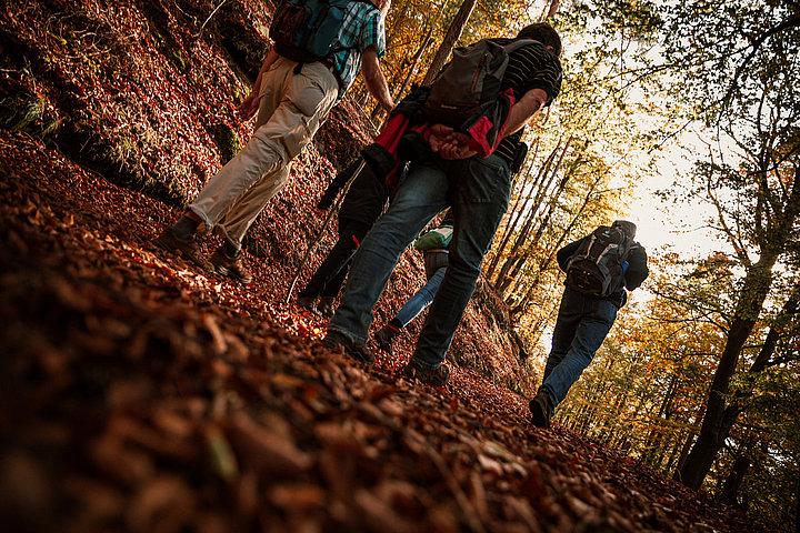 Wandern im Herbst im Pfälzerwald