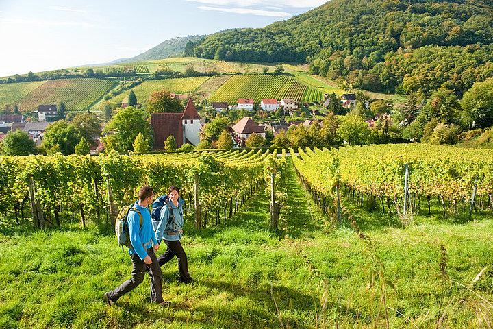 Wanderer bei Leinsweiler auf dem Prädikatsweg Pfälzer Weinsteig