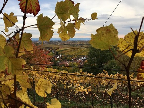 Leinsweiler durch Herbstlaub