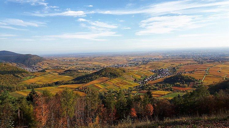 Aussicht vom Föhrlenberg im Herbst