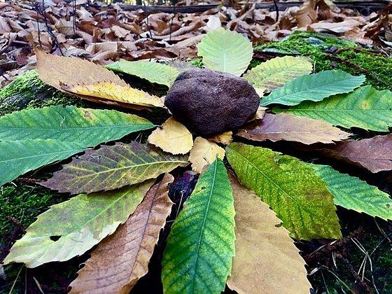 Kastanienblätter bunt