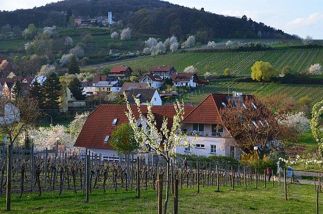 Frühling - Castell - Slevogthof - Leinsweiler