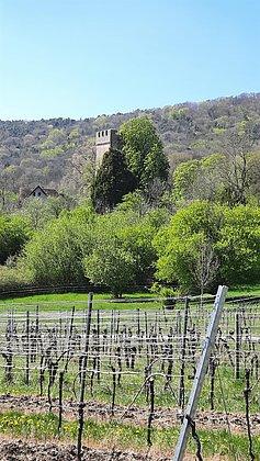 Pauliner Schloss3